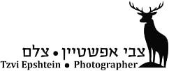 צבי אפשטיין